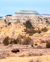Bison and Badlands