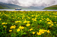 Buttercups and Boat