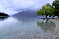Lake Wakatipu Willow, Queenstown, New Zealand