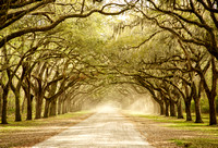 Wormsloe Oak Avenue
